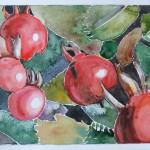 06 rote Beeren
